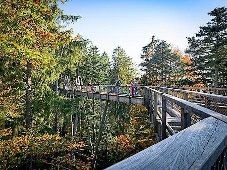 Herbstwanderung auf dem Baumwipfelpfad in Neuschönau